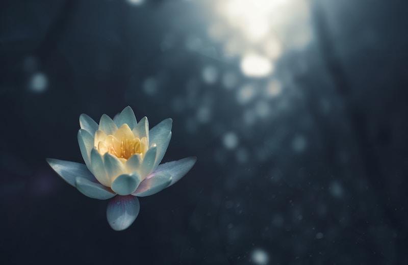 föreläsare mindfulness